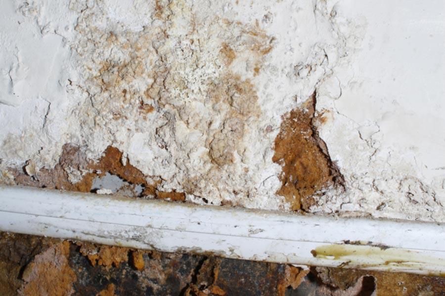 mold damage closeup